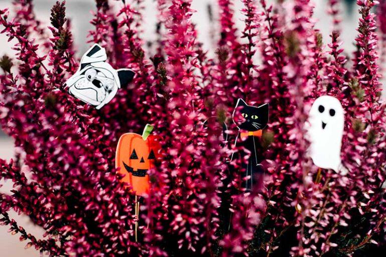 Halloween Color Palettes