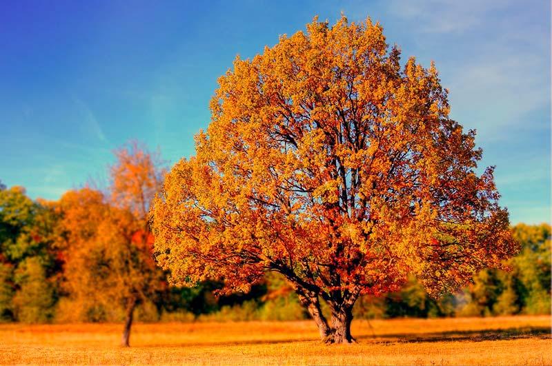 Autumn Color Palettes